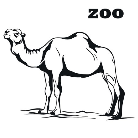 humped: Arabian camel. Black emblem on a white background