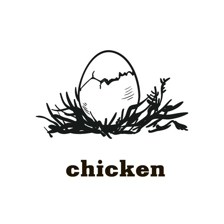 laying egg: chicken egg to chick hatching. hand drawn sketch Illustration
