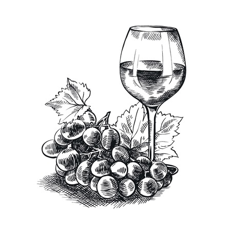 hand drawn sketches of tasting of vintage wines on a white background