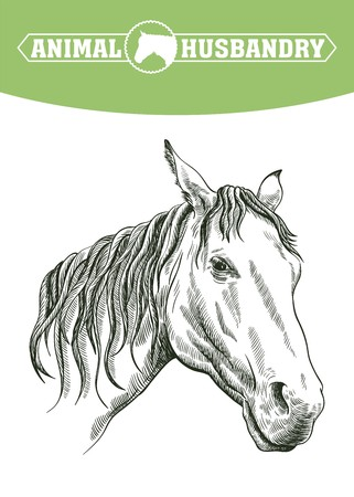 sketch of horse head drawn by hand on a white background. livestock. animal grazing