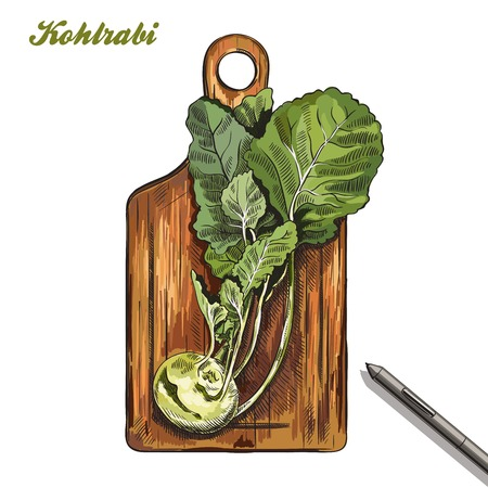 turnip: kohlrabi on a cutting board. harvesting. colored illustration made by hand on a white background. Illustration