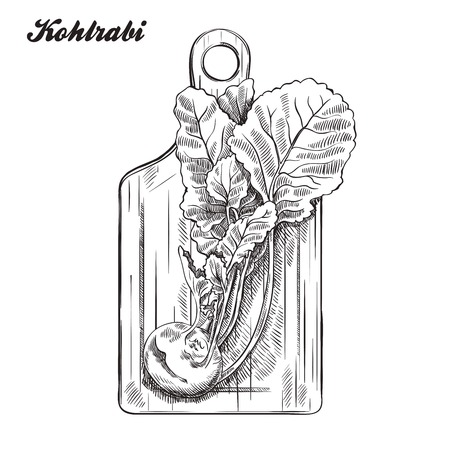 cutting board: kohlrabi on a cutting board. harvesting. sketch made by hand on a white background. Illustration
