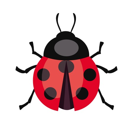 ladybug: Ladybug insect. Illustration