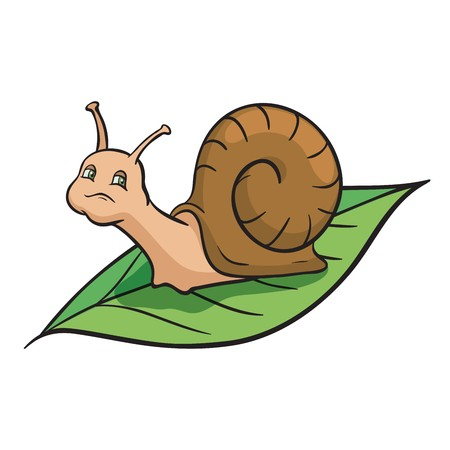 gastropod: Snail crawling on the green leaf. Illustration