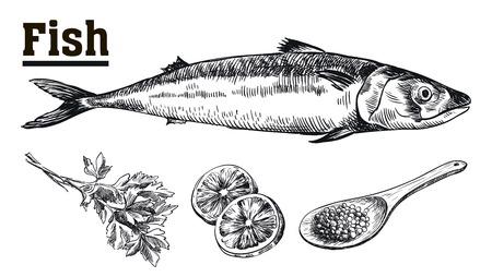 해물. 고등어. 물고기와 향신료. 흰색 배경에 손으로 그린 스케치