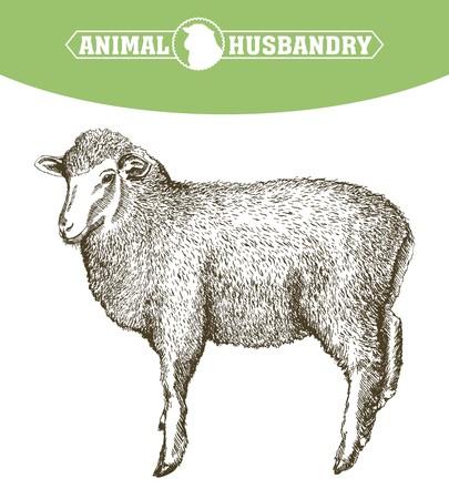 foreground: hand drawn sketch sheep