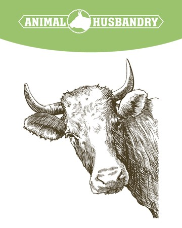 graze: sketch of cow drawn by hand on a white background. livestock. cattle. animal grazing