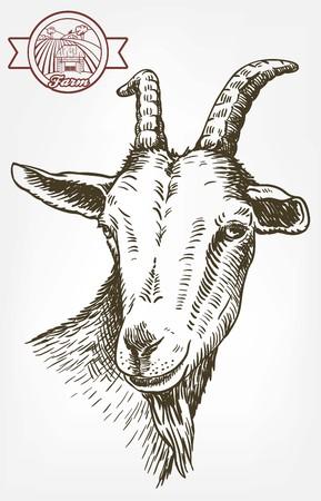 Ziege Kopf. Vieh. Tier Weiden. Skizze von Hand gezeichnet.