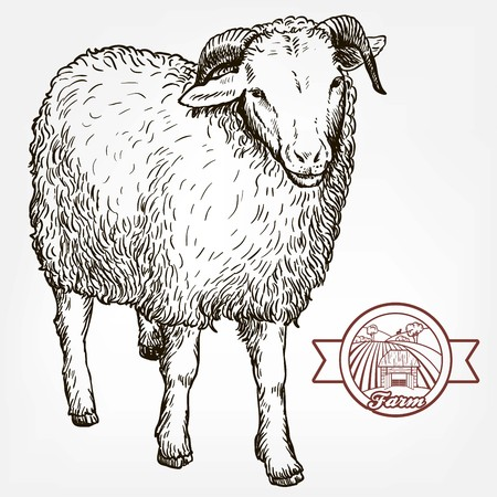 yeanling: sketch of sheep drawn by hand. animal husbandry Illustration