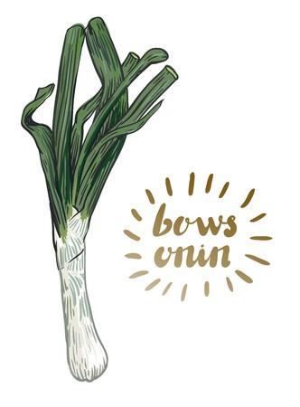 Bows onion sketch. Harvesting Illustration