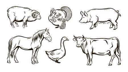 Farm animals sketches.