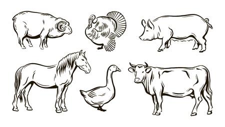 Farm animals sketches. Illustration
