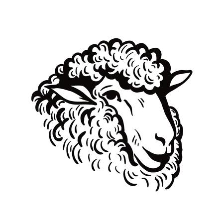 羊の頭のスケッチ
