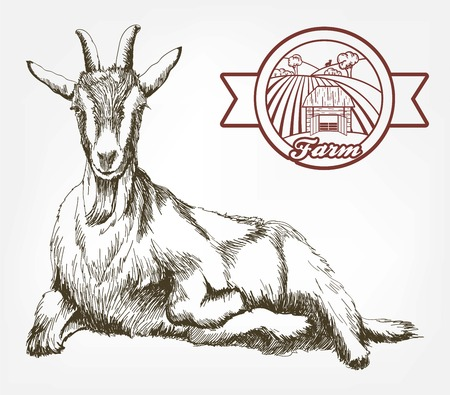 sketch of goat drawn by hand. livestock. animal grazing