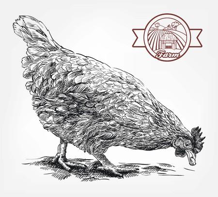 sketch of chicken drawn by hand. poultry breeding. livestock