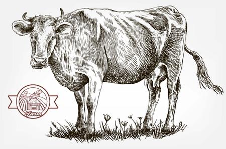 breeding cow. animal husbandry. livestock Ilustração