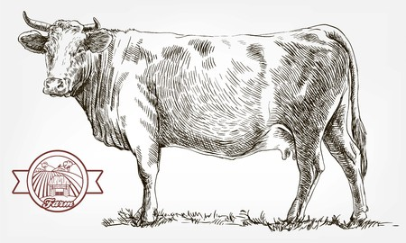 breeding cow. animal husbandry. livestock Imagens - 82987036
