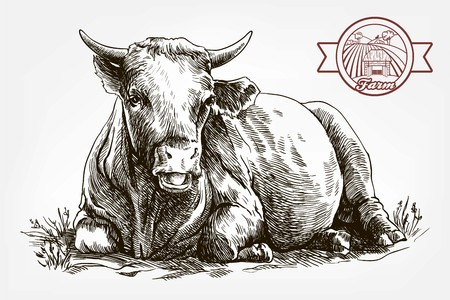 breeding cow. animal husbandry. livestock Ilustrace