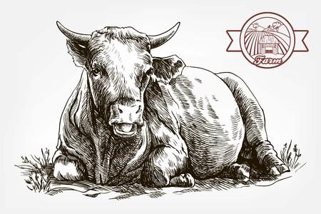breeding cow. animal husbandry. livestock Vettoriali