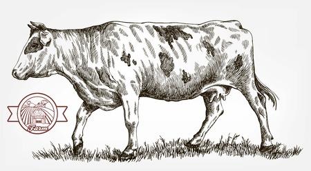breeding cow. animal husbandry. livestock Иллюстрация
