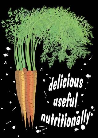 Sweet carrots on black background. Vector illustration.