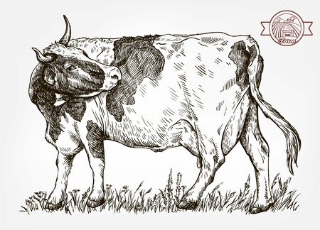 Breeding cow, animal husbandry, livestock. Vector illustration. Çizim