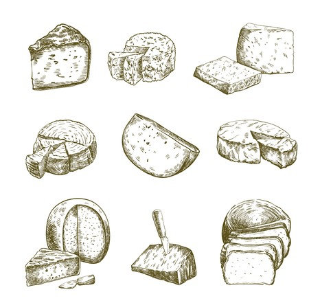 Different types of cheese. Set of vector sketches on white
