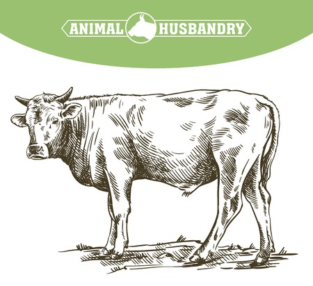 Breeding cow, animal husbandry, and livestock illustration. Ilustração