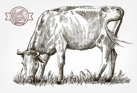 breeding cow. grazing cattle. animal husbandry. livestock. vector sketch on a grey background Imagens - 88078158