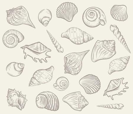 Sea shellfish and seashells. Vector illustration