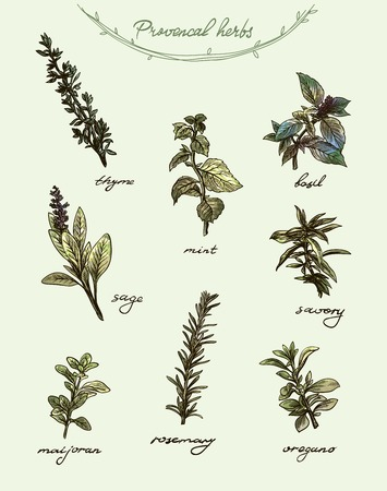 Collection of herbs and spices on a light background in color with signatures