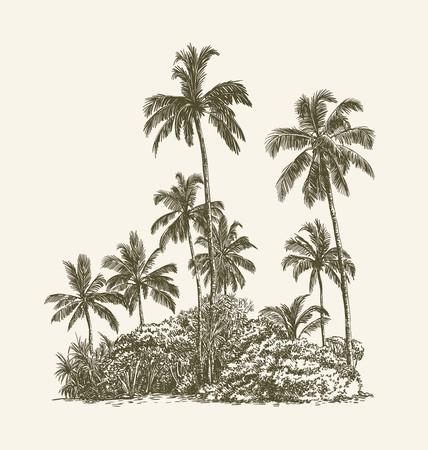 Dessin de palmiers et de bosquets tropicaux sur le sable Vecteurs