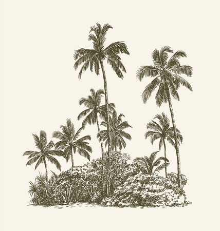 Drawing of palm trees and tropical thickets on the sand Vektoros illusztráció