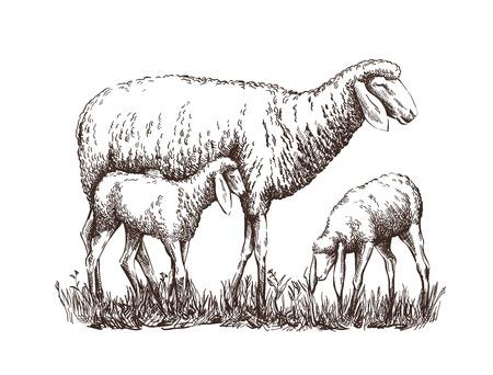 Oveja pintada y de pie junto a dos corderos.