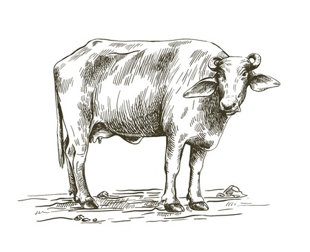 black and white drawing of a buffalo standing on the ground
