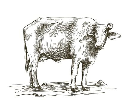 Dibujo en blanco y negro de un búfalo de pie en el suelo
