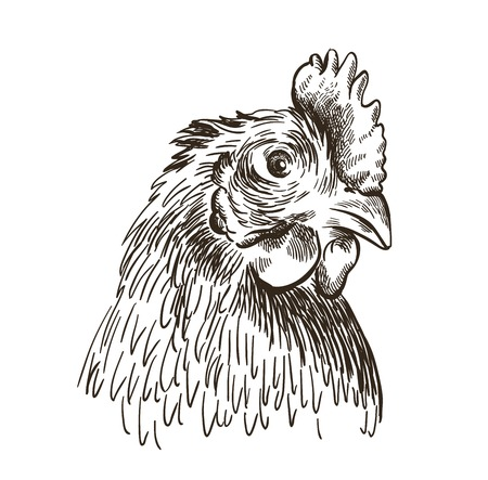 the head of a chicken. vector sketch on white  イラスト・ベクター素材