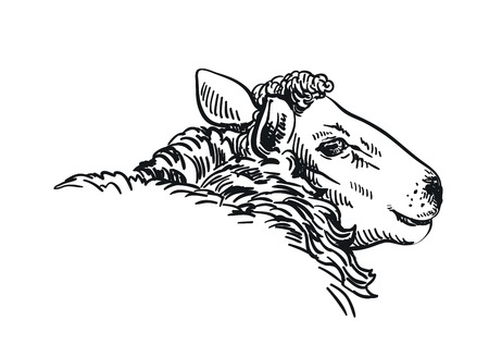 black and white drawing of a sheep in profile Vector Illustration