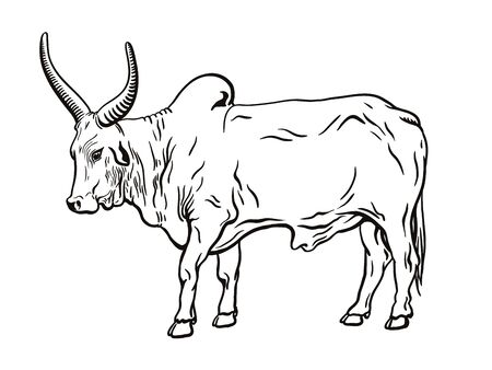 silhouette of cow drawn by hand. livestock. cattle. animal grazing Imagens