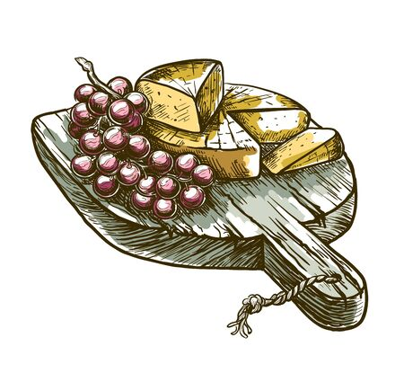 gourmet cheese and grapes. vector sketch on a white Ilustrace