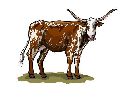 breeding cow. grazing cattle. animal husbandry. livestock. vector illustration on a white background Vector Illustration