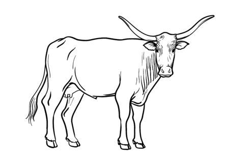 breeding cow. animal husbandry. livestock vector illustration on a white