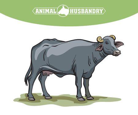 breeding cow. animal husbandry. livestock illustration on a white