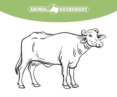 breeding cow. grazing cattle. animal husbandry. livestock. illustration on a white background  イラスト・ベクター素材