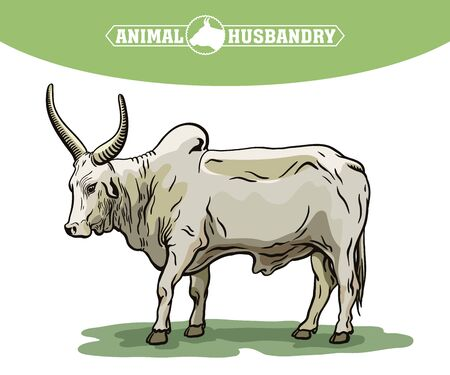color bull drawn by hand. livestock. cattle. animal grazing