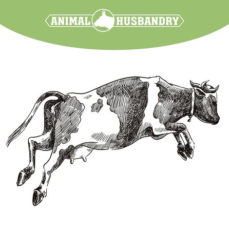 breeding cow. animal husbandry. livestock illustration on a white  イラスト・ベクター素材