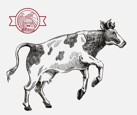 breeding cow. animal husbandry. livestock illustration on a grey 向量圖像