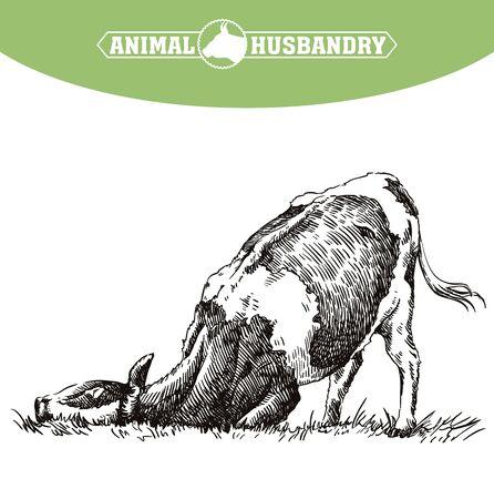 breeding cow. animal husbandry. livestock illustration on a white 向量圖像