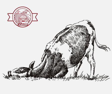 breeding cow. animal husbandry. livestock illustration on a grey Ilustração