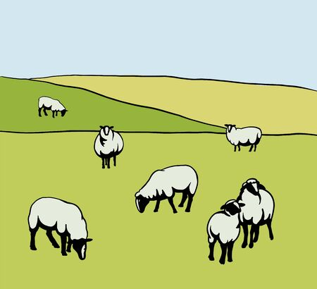 sheep breeding. set of simple vector illustrations on meadow background Illusztráció